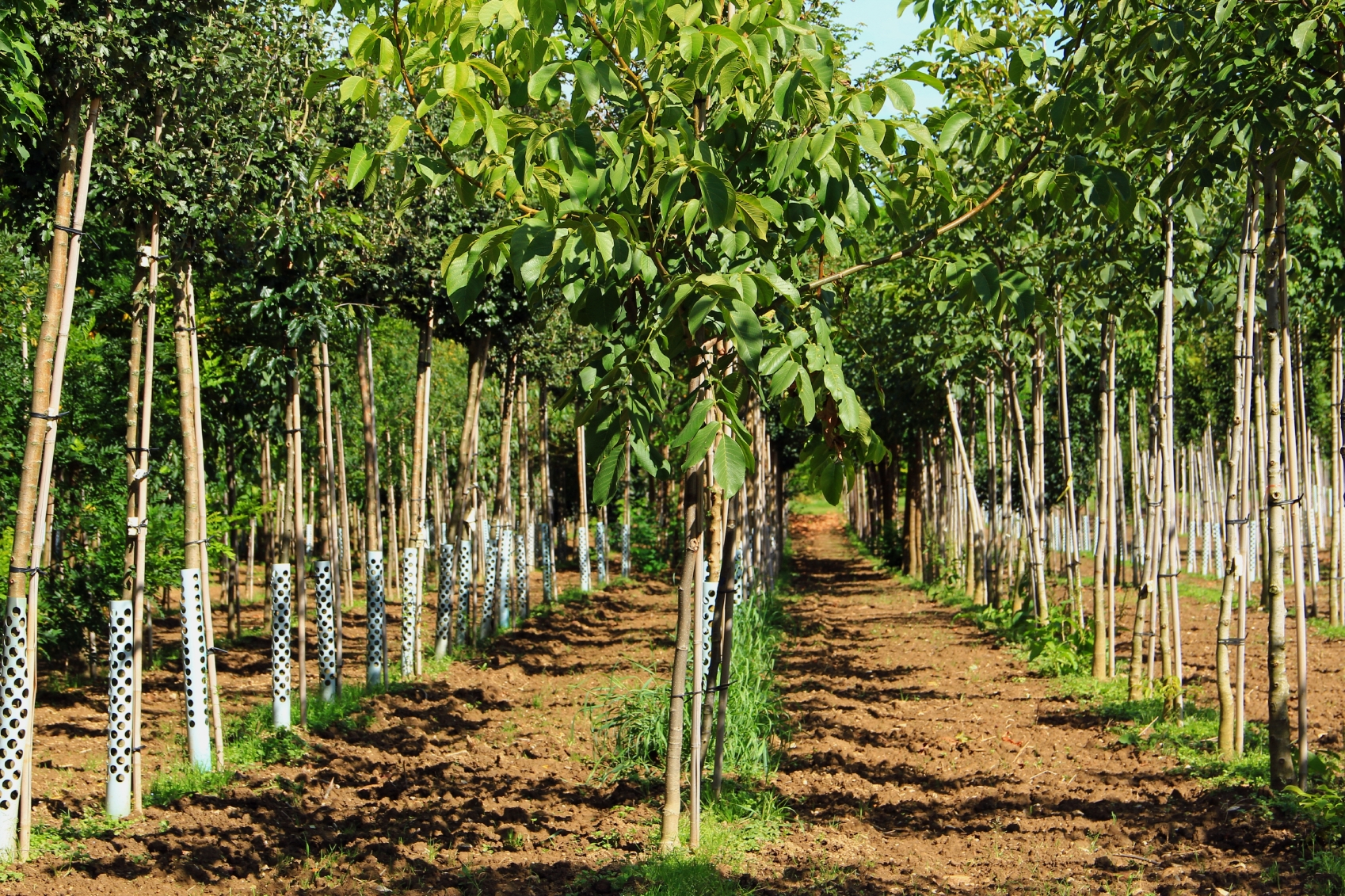 Back Tree Nursery