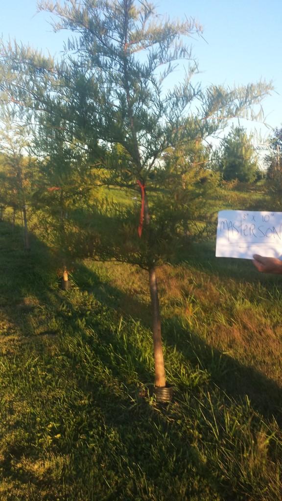 Tree Nursery 123