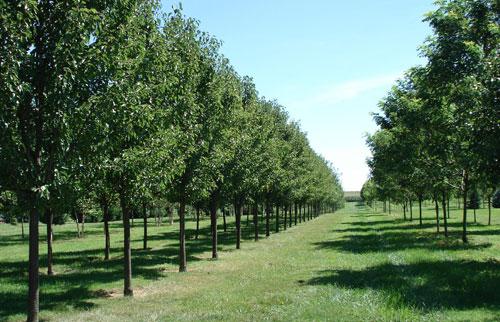 tree_varieties